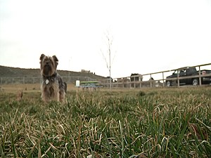 KNDU TV - Paws Abilities Dog Park