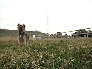 KNDU TV - Paws Abilities Dog Park